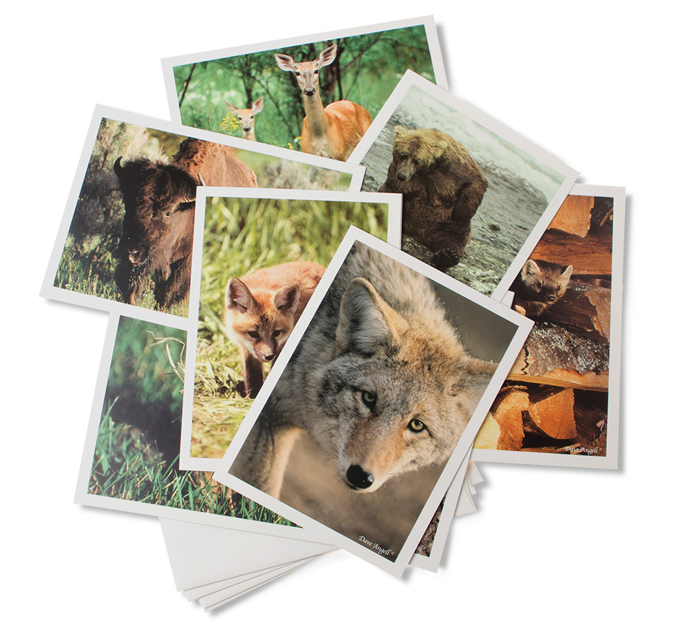 Gift-cards-mammals