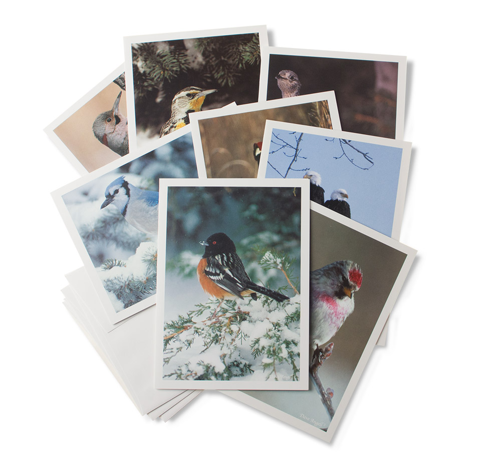 Gift-cards-winterbirds