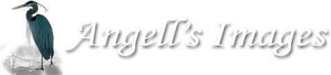 Angell's Images - The diversity and beauty of our natural world