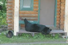 Cabin-Bear