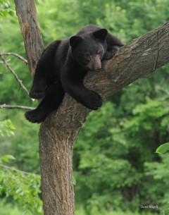 Hangin' Out - Awake