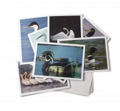 Gift-cards-aquaticbirds