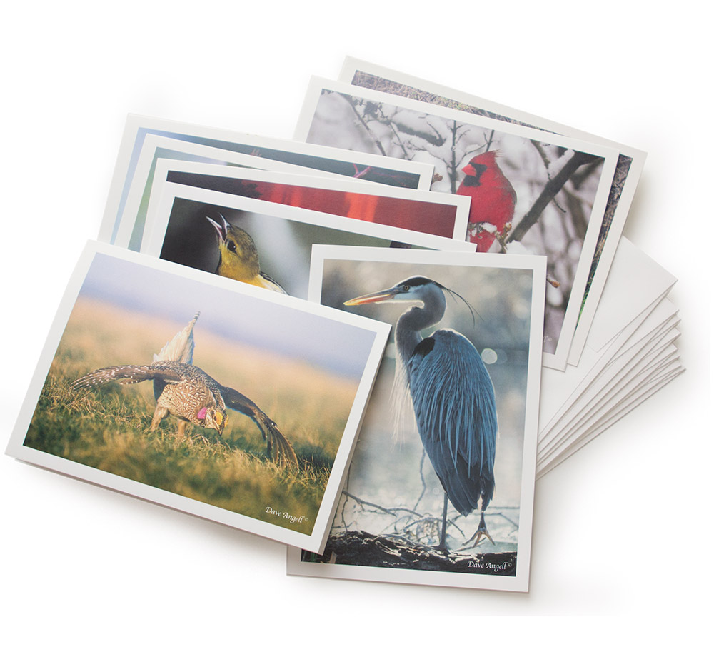 Gift-cards-birdassortment
