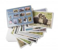Gift-cards-boxed-dakotas