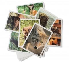 Gift-cards-mammals