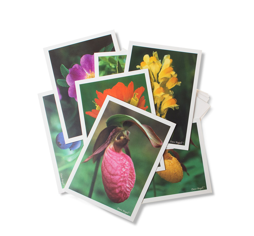 Gift-cards-plants