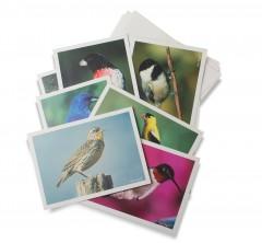 Gift-cards-summerbirds