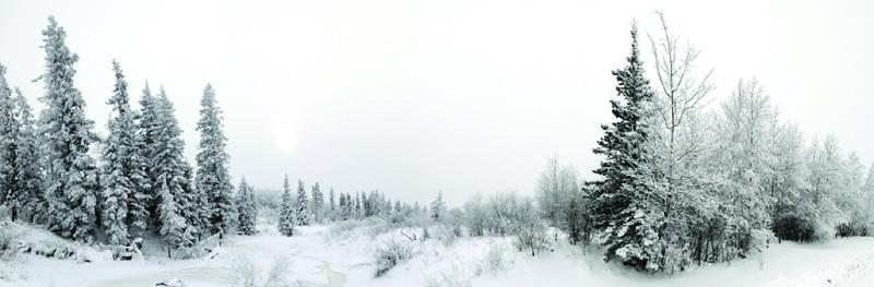 Northwoods Winter