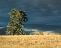Yellowstone Scenic I