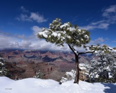 Grand Canyon for web site